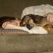 Heidi Mastrogiovanni, napping with dog